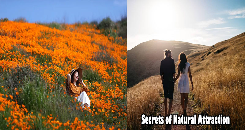 The Secrets Of Natural Attraction Can Be Difficult To Understand